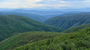 Wälder, Wälder und nochmals Wälder...