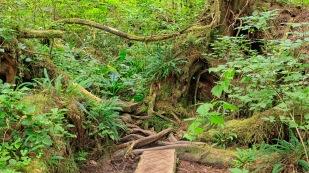 Im dichten Regenwald