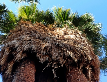 Wundersame Palmen