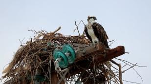 Der Adler schaut zu