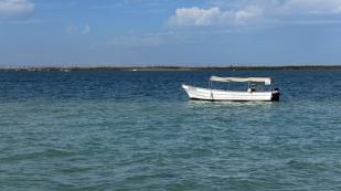 Am Ufer...