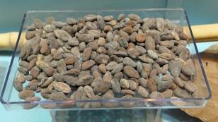 Fermentierte Kakaobohnen