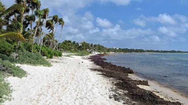Soliman Bay - Sicherlich sonst ein schöner Strand