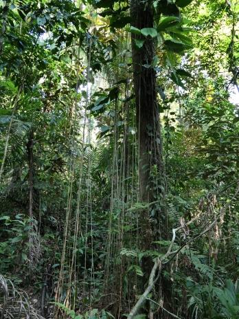 Richtiger Dschungel