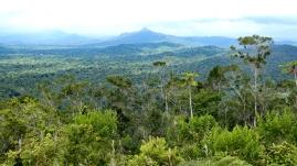 Blick zum Victoria Peak, dem zweithöchsten Berg von Belize (1.120 m)