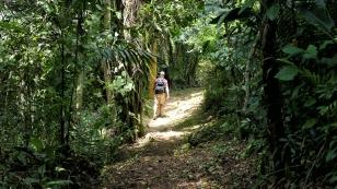 ...auf dem Weg durch den Dschungel...