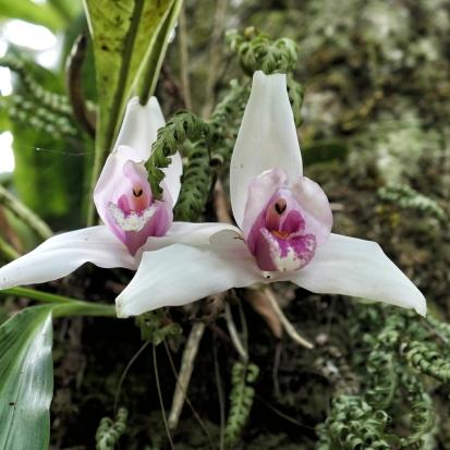 Im kleinen Orchideenpark...