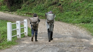 Anlieferung der schweren Kaffeesäcke