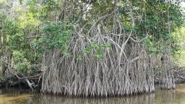 ...mit seinen Mangrovenwäldern...