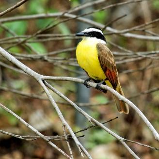 Farbenfrohe Vögel...