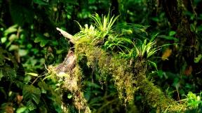 ...mit Moos und Pflanzen bewachsenen Bäumen