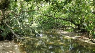 Der Cahuita Nationalpark...