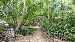 ...den Dschungel wandern...