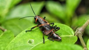 Interessante Insekten...
