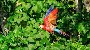 ...sehen wir die Papageien