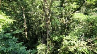Dichter Dschungel