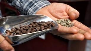 Gerösteter und ungerösteter Kaffee