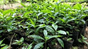 Herangezogene Jungpflanzen