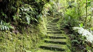 Über bemooste Stufen...
