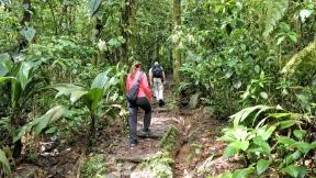 ...geht es durch den Regenwald