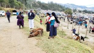 Schweine an der Leine sind nichts ungewöhnliches