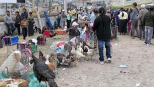 Samstagmorgen auf dem Viehmarkt