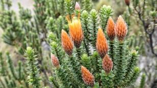 ...eine Vielzahl interessanter Pflanzen