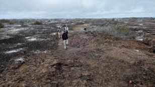 Auf der Suche nach der Sumpfohreule