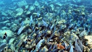 So tolle Fische...