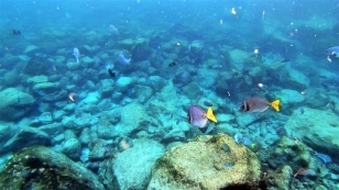 Bunte Fischwelt