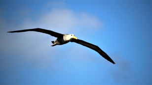 ...und können eine Flügelspannweite von 3,50 m erreichen