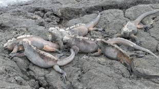 Sie wärmen sich auf den Felsen