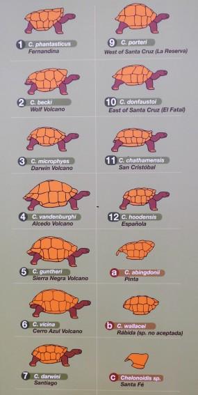 Vorkommende Schildkrötenarten auf den jeweiligen Inseln