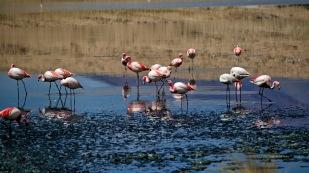 ...empfängt uns bereits mit Flamingos