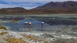 ...und den vielen Flamingos...