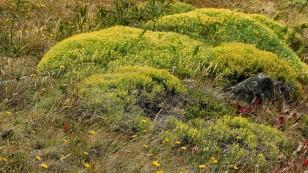 Ein gelber Teppich in der Landschaft