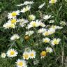 Aber es gibt auch viele Blumen im Park