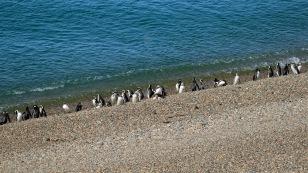 ...an dem die Pinguine zuhause sind.