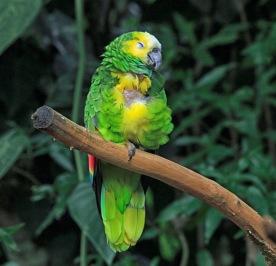 Im Parque das Aves...