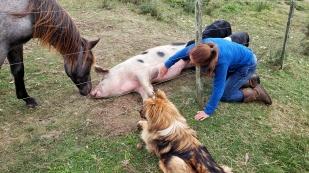 """Schwein """"Schnitzel"""" lässt sich verwöhnen."""