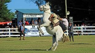 Das Pferd mag es einfach nicht.