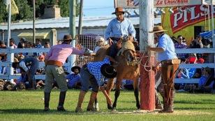 Das Pferd wird festgebunden und bekommt die Augen abgedeckt.